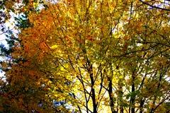 Autumn trees illuminated with sun stock photos