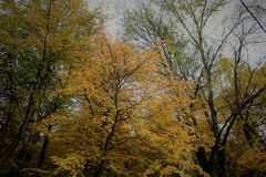 Autumn Trees im Wald Lizenzfreies Stockbild