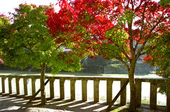 Autumn Trees in Japan Royalty Free Stock Photography