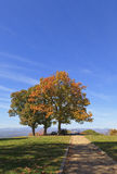 Autumn Trees. Jump Off Rock in the Fall Stock Photography