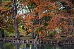 Autumn Trees längs flodbanken Arkivbilder