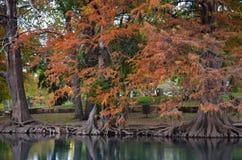 Autumn Trees längs flodbanken Arkivbild