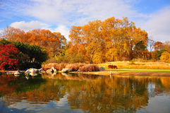 Autumn trees and lake Stock Photography