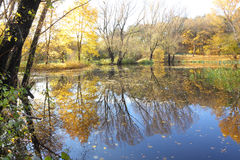 Autumn trees and lake Stock Photos