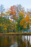 Autumn trees and lake. Scenic view of Autumn trees reflecting on lake stock photo