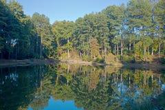 Autumn trees and lake Royalty Free Stock Photos