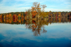 Autumn trees at the lake. Beautiful colors of autumn at the lake royalty free stock photo