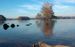 Autumn trees at the lake. Beautiful colors of autumn at the lake and a group of trees on an island Stock Photo
