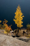 Autumn trees by lake. Side at base of mountainous slope, Karelia, Russian Federation Royalty Free Stock Images