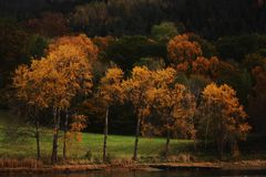 Autumn. Trees with the lake autumn Royalty Free Stock Image