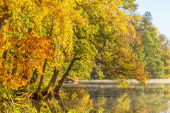 Autumn trees by the lake with fog Stock Photos