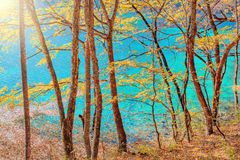 Autumn trees by the lake. Stock Image