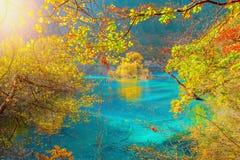 Autumn trees by the lake. Stock Photo
