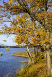 Autumn trees on the lake in Lithuania Stock Images