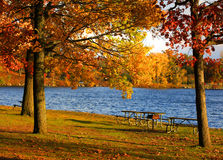Autumn trees by the lake Royalty Free Stock Image