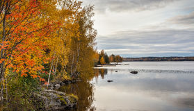 Autumn trees by a lake stock image