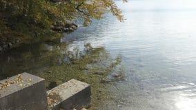 Autumn trees on a lake shore