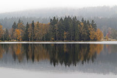Autumn trees on the lakeshore Stock Images