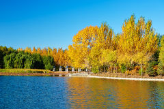 The autumn trees landscape Stock Photos
