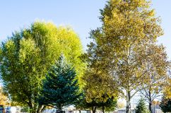 Autumn Trees. This is a landscape photo of autumn trees in Wyoming stock images