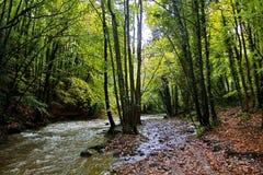 Autumn Trees langs de Rivier Alyn, Rhydymwyn Stock Foto's