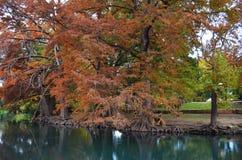 Autumn Trees langs Rivierbank Stock Afbeeldingen