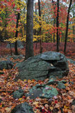 Autumn trees and large boulders Royalty Free Stock Images