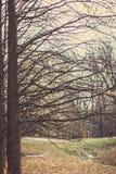 Autumn trees, leaves. Betuful autumn landscape. Uman, Ukraine. The most beautiful plase in Europe. National Ukraine park Sofiivka royalty free stock photo
