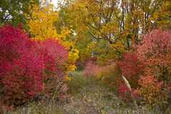 Autumn trees with leaves of bright colors green red yellow. In the woods Royalty Free Stock Photos