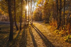 Sun throw the trees backlight autumn trees and leaves colors and shadows. Autumn trees and leaves colors and shadows. Sun throw the trees backlight royalty free stock image
