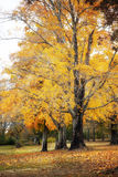 Autumn trees with leaves on the ground Stock Photo