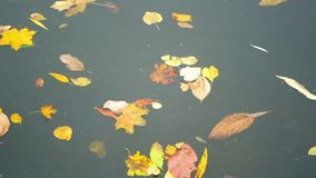 Autumn trees leaves lake. Autumn trees reflecting in the forest lake stock video