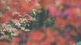 Autumn Trees Leaves over blurred background.  stock video footage
