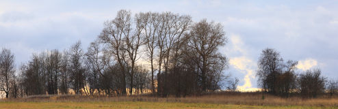 Autumn trees without leaves panorama Royalty Free Stock Photography
