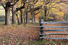 Autumn trees, leaves and split rail fence Stock Photos