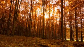 Autumn Trees and Leaves in sun rays. Sun rays through autumn trees and leaves stock video footage