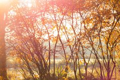 Autumn trees. Letting go is beautiful Stock Photography