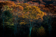 Autumn Trees in Light and Shade Stock Images