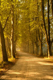 Autumn trees lining road royalty free stock images