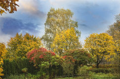 Autumn trees, lithuania stock images