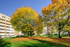 Autumn trees in a living block Stock Photo