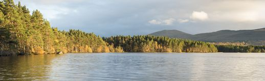 Autumn trees at Loch Garten in the Cairngorms National Park of Scotland. Stock Photo