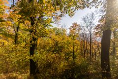 Autumn trees on Lviv background royalty free stock photo