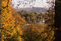 Autumn trees on Lviv background stock photos