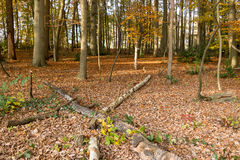 Autumn trees and many fallen leaves, Netherlands Stock Photo