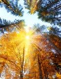 Autumn Trees med solstrålar - härlig sesonalbakgrund, nedgång arkivfoton