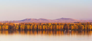 Autumn Trees Mirroring On Danube flod med Macin berg i bakgrund Royaltyfri Bild