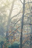 Autumn trees in mist stock images