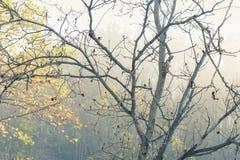 Autumn trees in mist stock photography