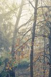 Autumn trees in mist stock photo
